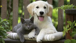 Was fühlen und wollen Tiere wirklich?