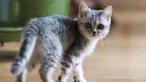 Veränderung der Gene bei Katzen
