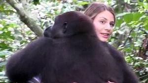 Gorilla erkennt Frau nach Jahren wieder