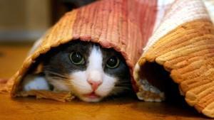 Katzenjammer adé: Spielideen für Ihren Stubentiger