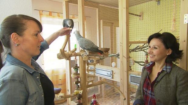 Vorschau | Rosenkrieg im Papageienzimmer | 3 Engel für Tiere | S02E08