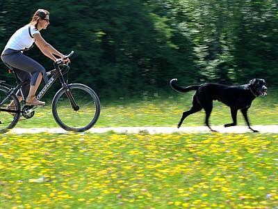 fahrrad fahren mit hund. Black Bedroom Furniture Sets. Home Design Ideas