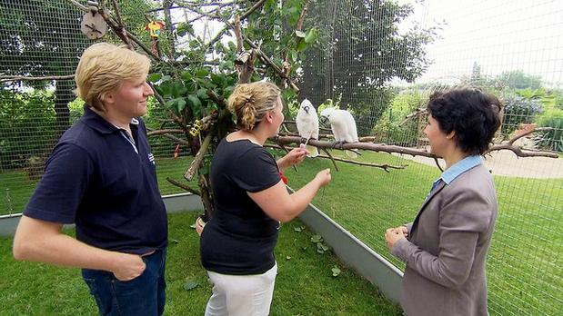 3 Engel für Tiere mit Ann Castro, VOX Vorschaubilder