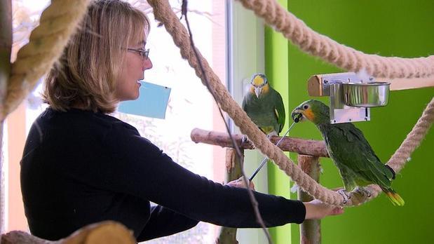 Vorschau | Papageien im Tiefflug | 3 Engel für Tiere | S02E04