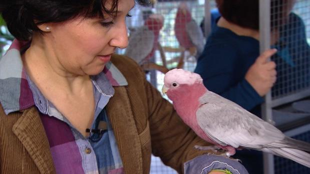Vorschau | Dicke Luft im Kakadu-Schwarm | 3 Engel für Tiere | S02E06